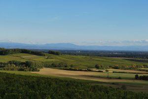 Au loin l'abbatiale Ebersmunster et la Forêt Noire